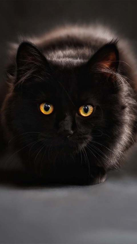 Eyes Black Cat Wallpaper Phones Genius777 Com Printables
