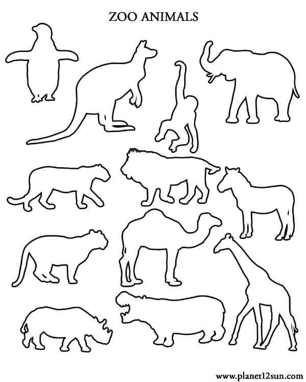 zoo animals outlines coloring page preschool kindergarten