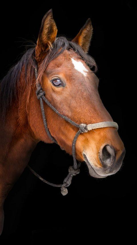 Horse - Head wallpaper