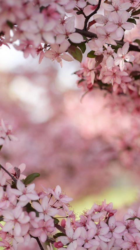 Flowering Trees wallpaper