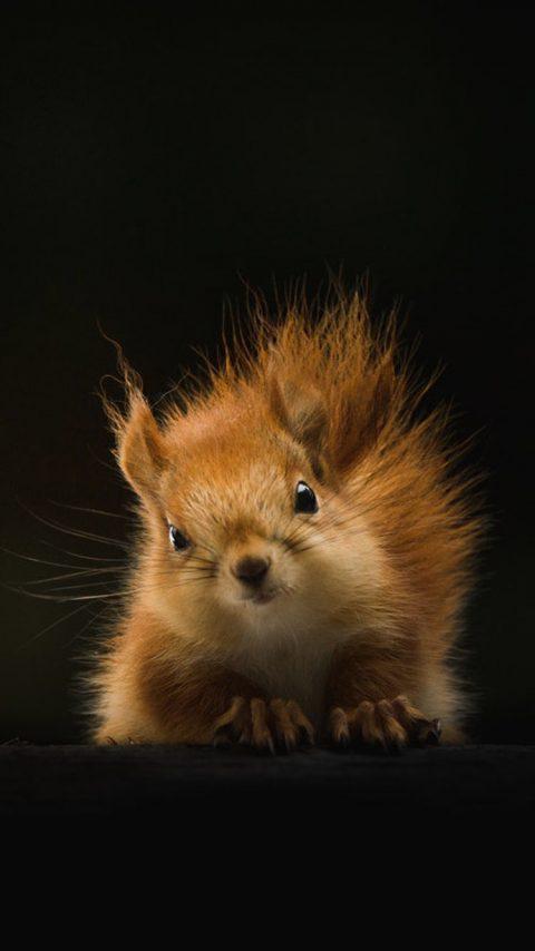 Baby Squirrel wallpaper