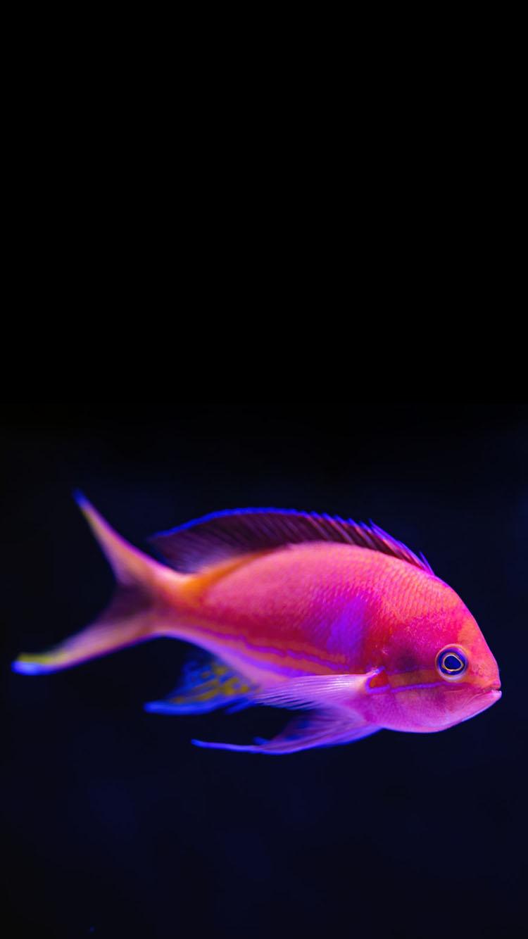 Pink Tropical Fish Wallpaper Phone Genius777 Com Printables